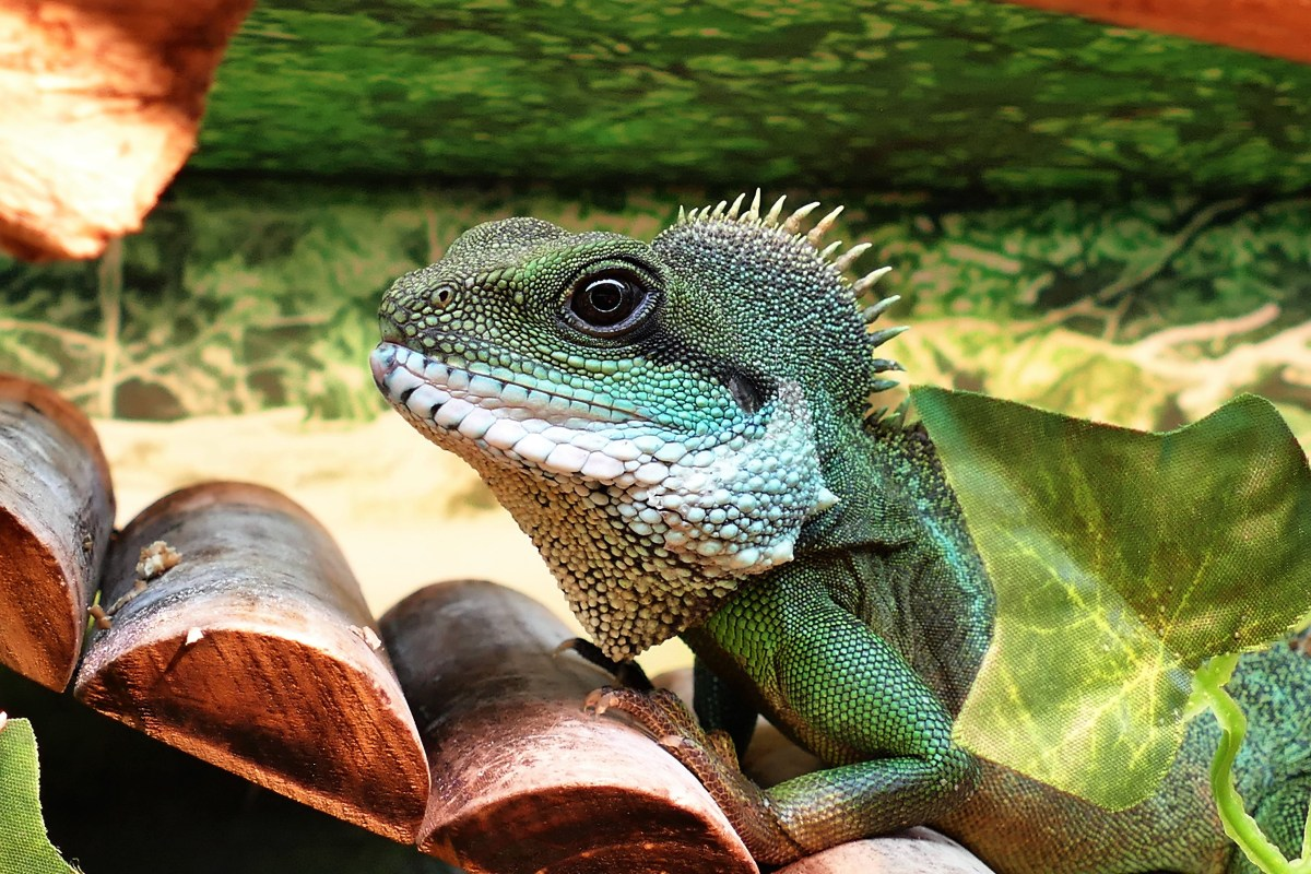 Free stock photo of animal, pets, green, lizard