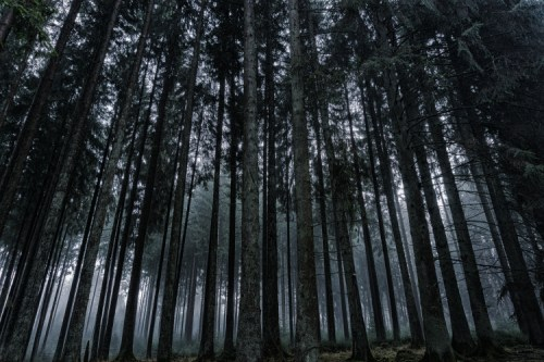High Angle Photography Of Green Forest Trees 183 Free Stock