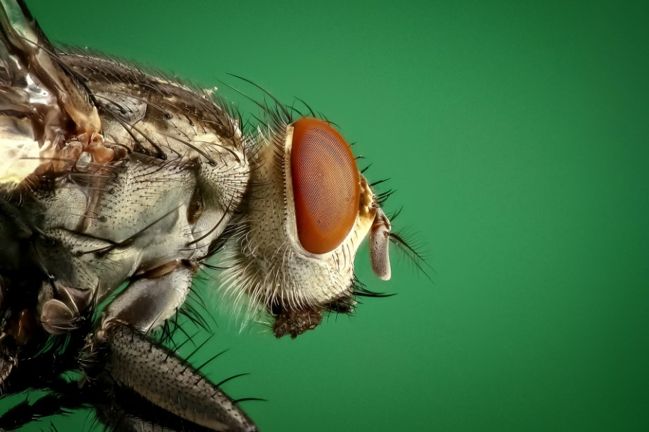 The Key Elements of Great Pests
