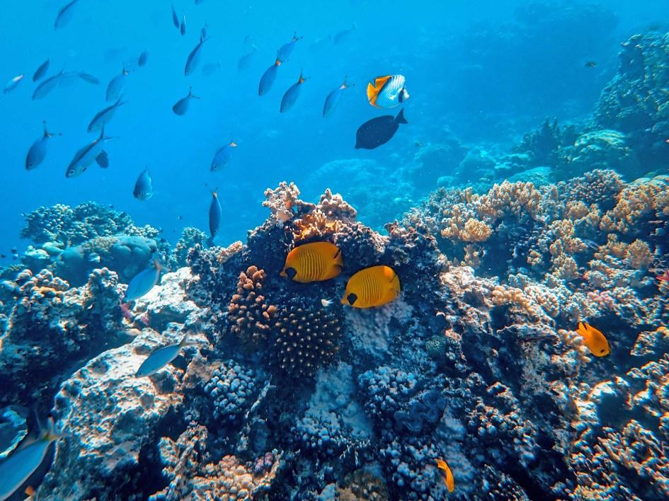 Underwater Photography of Fish
