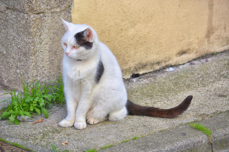 kostenloses foto zum thema animalier bavarder chat noir et blanc
