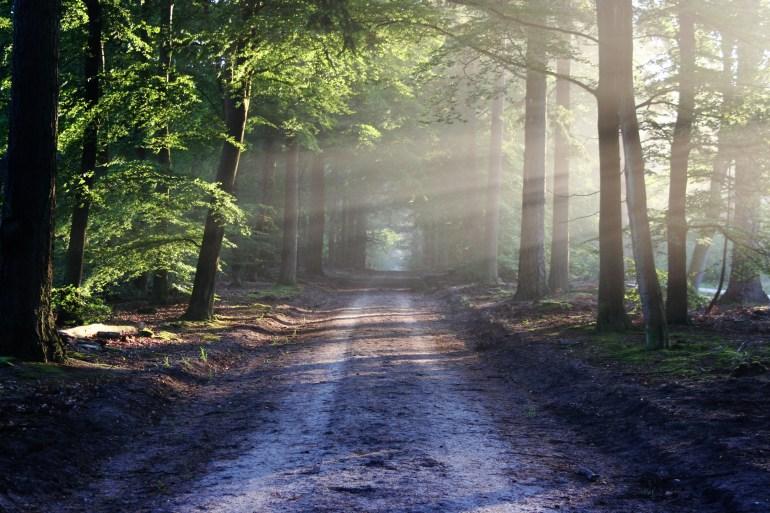 forest, landscape, light