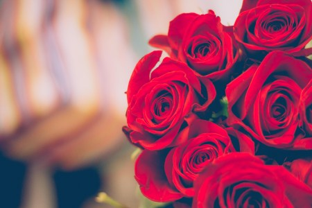 Red Roses      Pexels      Free Stock Photos Free stock photo of red  flowers  petals  blur
