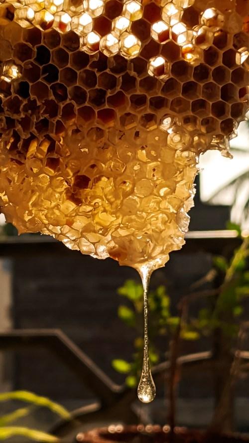 Dicas para saber se o mel é verdadeiro
