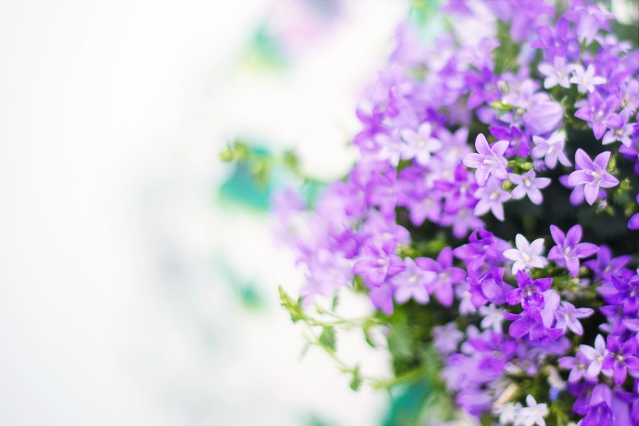 Purple Flowers      Pexels      Free Stock Photos Free stock photo of nature  flowers  garden  petals