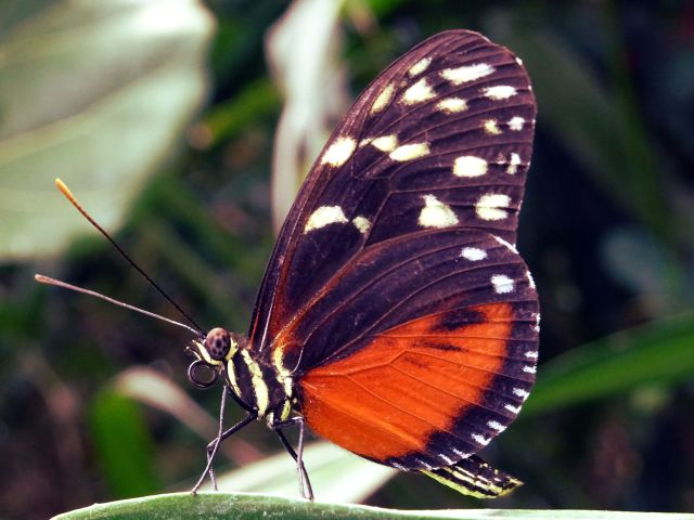 The Butterfly Effect of Racism