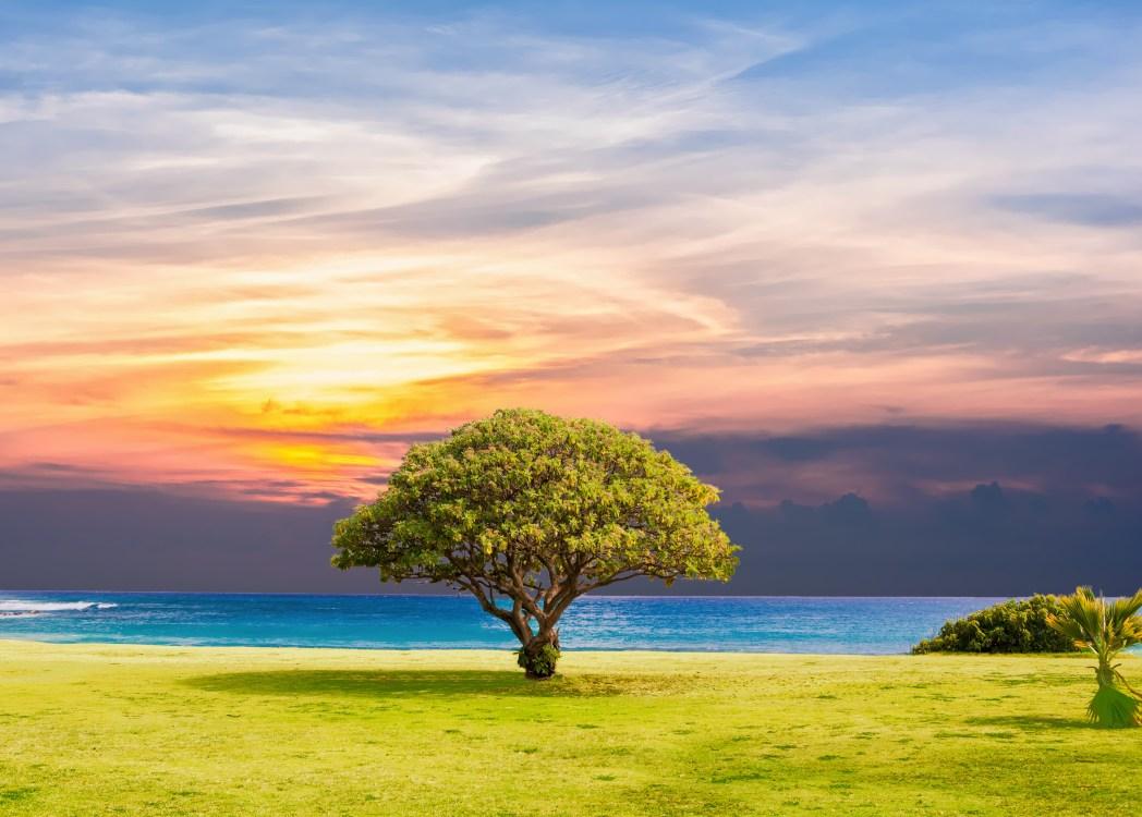 City of End: The Tree of Life Series Vol. 1 Katelyn E McCallum