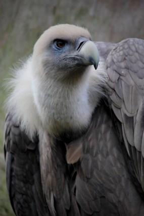 Free stock photo of bird, animal, beak, outdoors