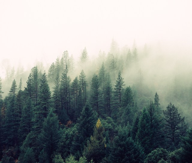 High Angle Photography Of Green Forest Trees
