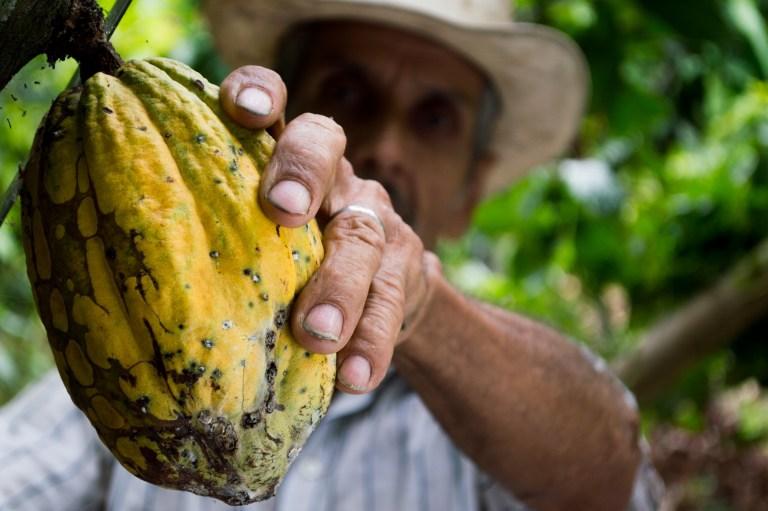 Die heilige Pflanze Kakao und ihre magische Wirkung ist seit tausenden von Jahren bekannt. Ihr Geist verspricht Heilung auf allen Ebenen und mit der Kakao Zeremonie öffnen wir ihr die Pforten zu unserem Bewusstsein.