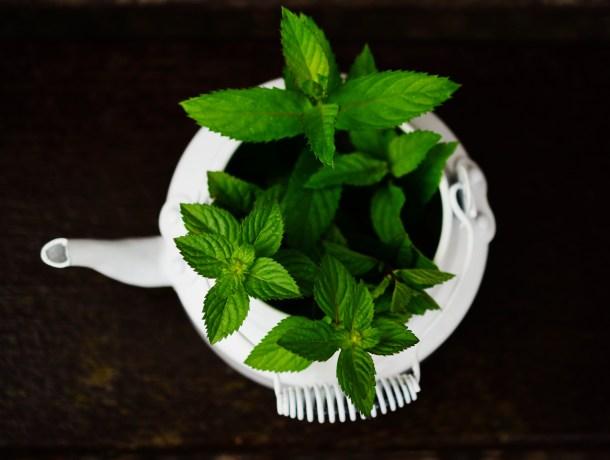 peppermint tea leaves in a tea kettle