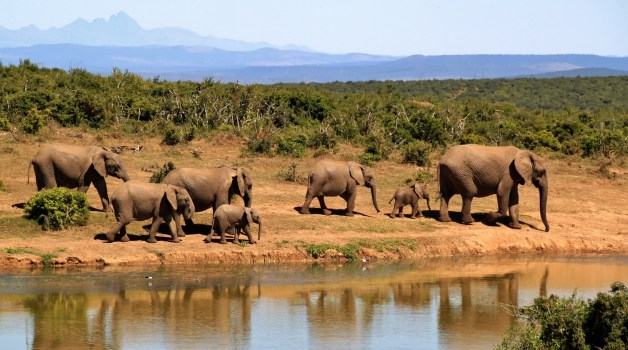 7 Elephants Walking Beside Body of Water during Daytime