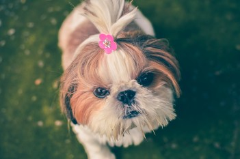animal, cute, dog