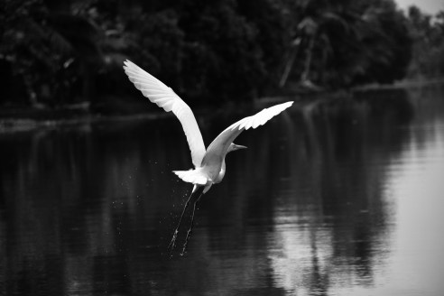 Gray Scale Photography of Bird
