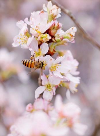 albero, ape, bellissimo