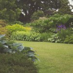 Tackling an Overgrown Garden in 6 Simple Steps