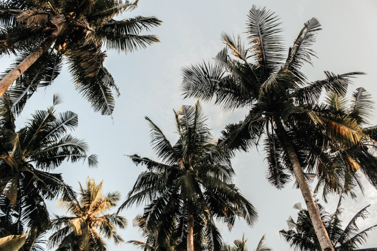 Low-angle Photography Of Coconut Trees