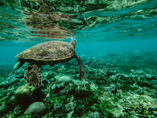 Photo of a Turtle Underwater