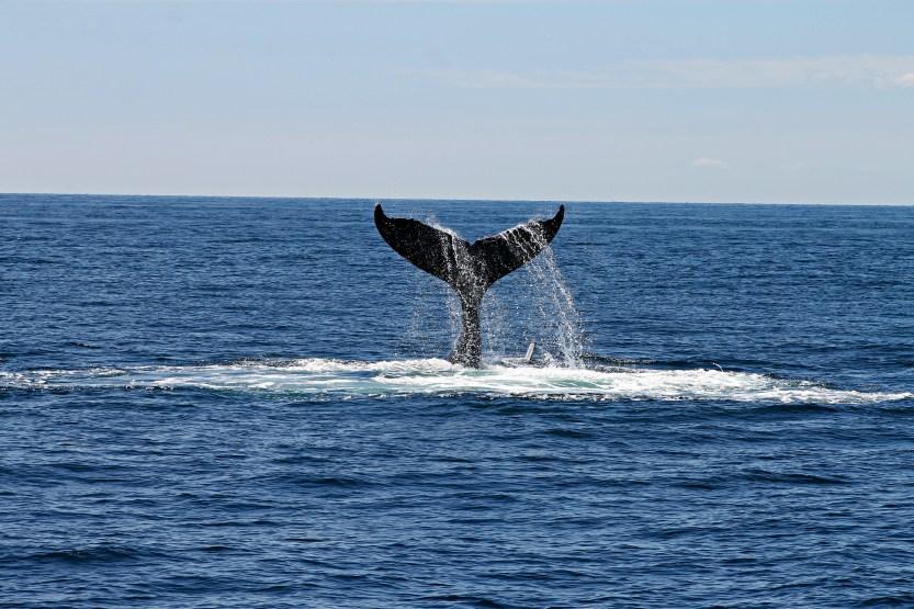 abysses, animal, baleine