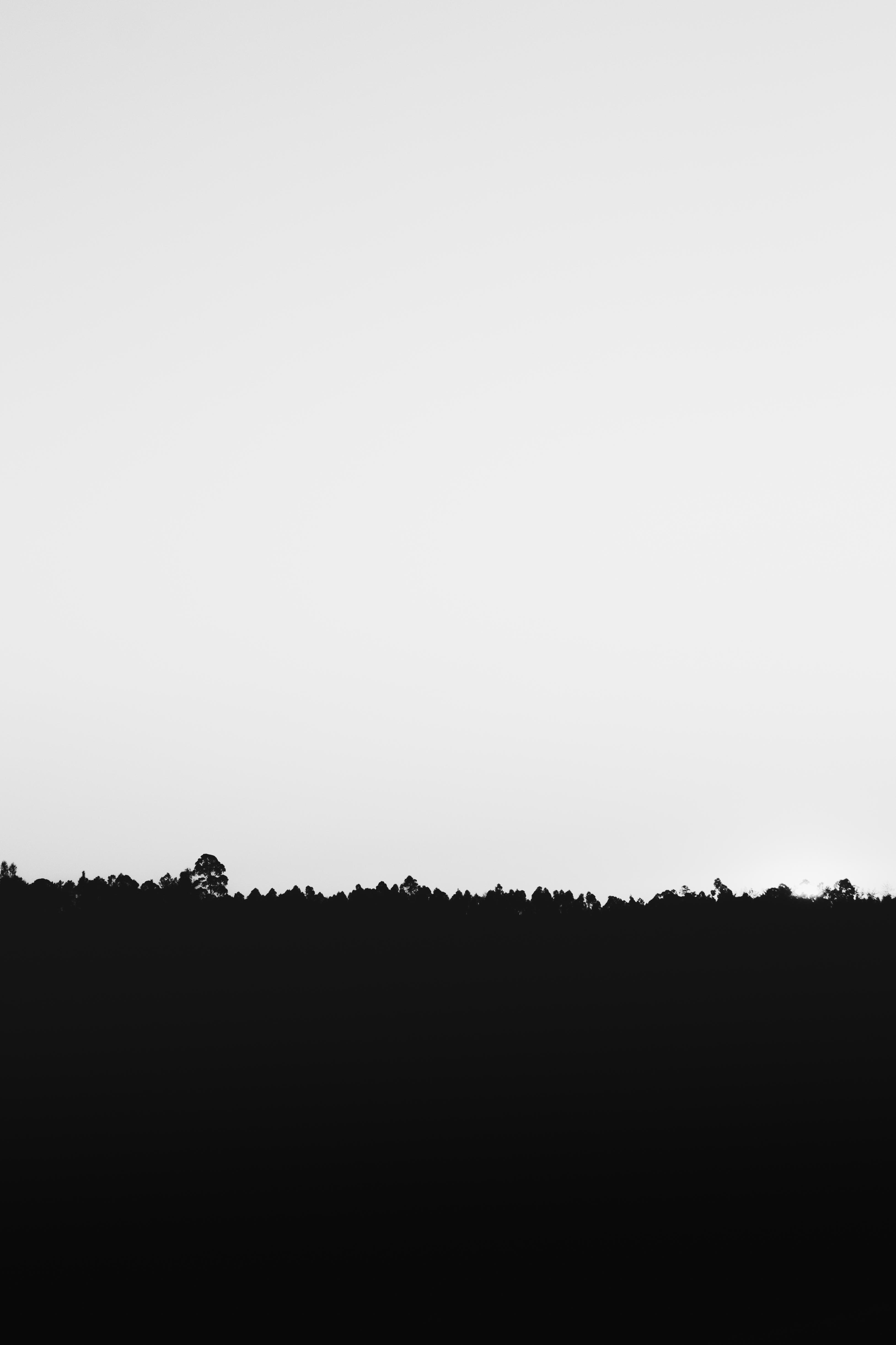 1000 Beautiful Black And White Background Photos Pexels Free Stock Photos