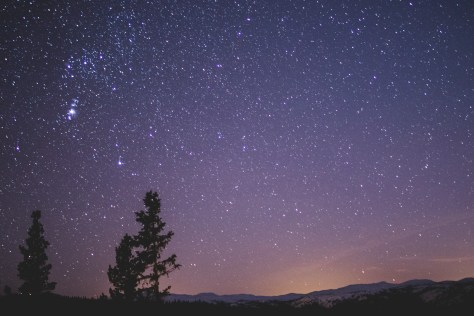Silhouette of Spruce Trees Under Starry Night