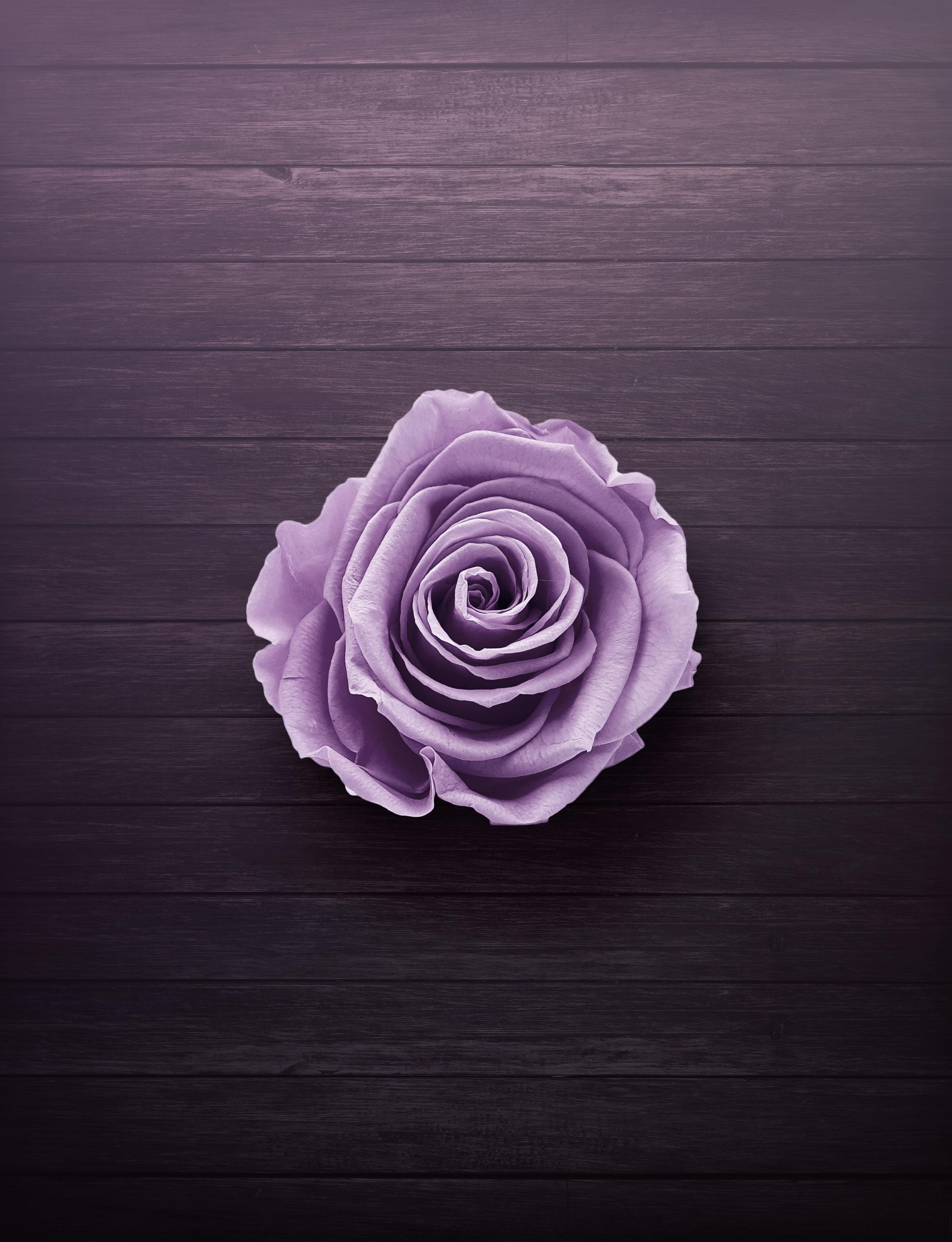 Macrophotography of Purple Petal Flower 183 Free Stock Photo
