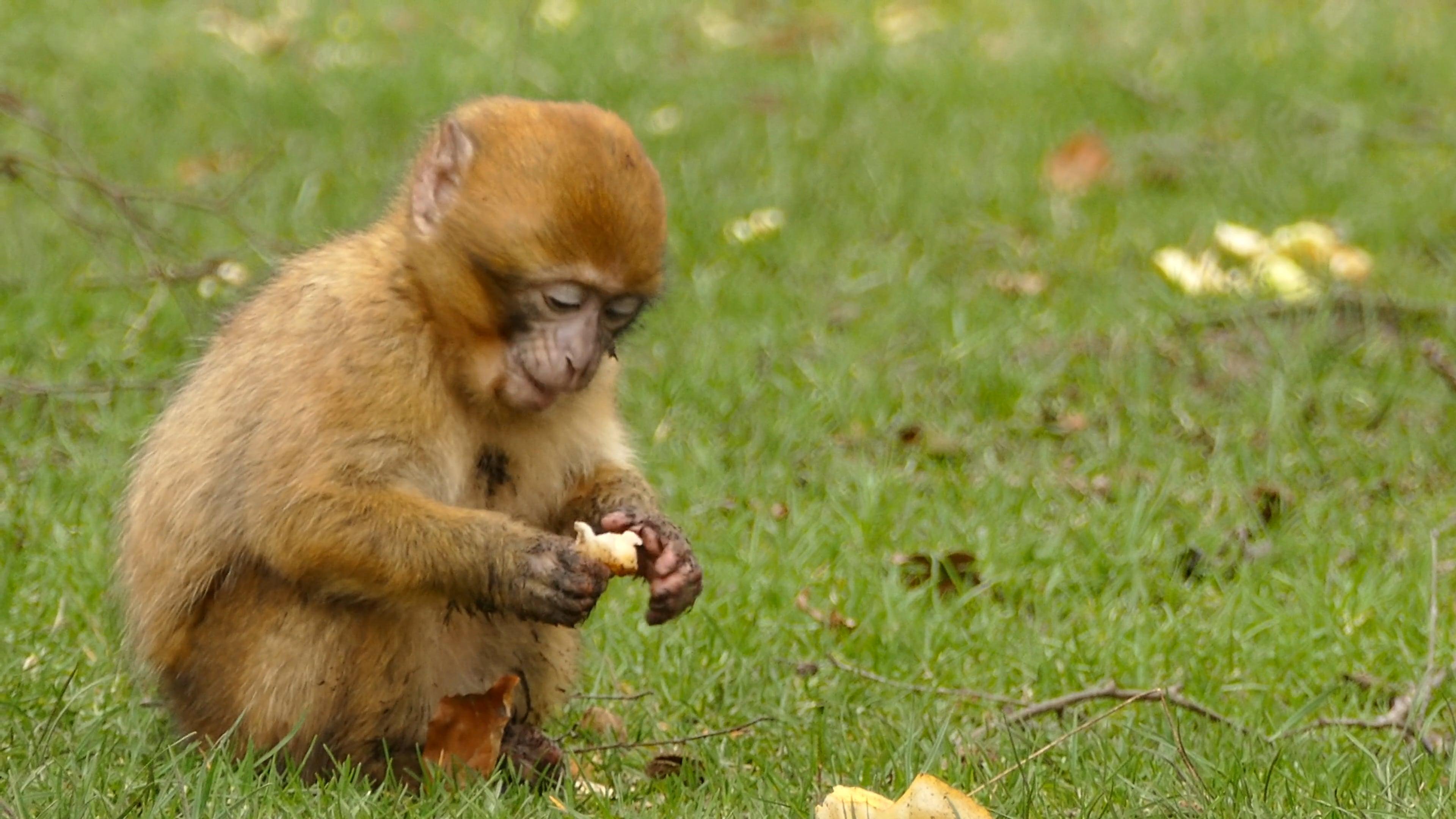 1000 Beautiful Animals Videos Pexels Free Stock Videos