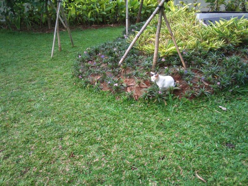 Kucing di Taman