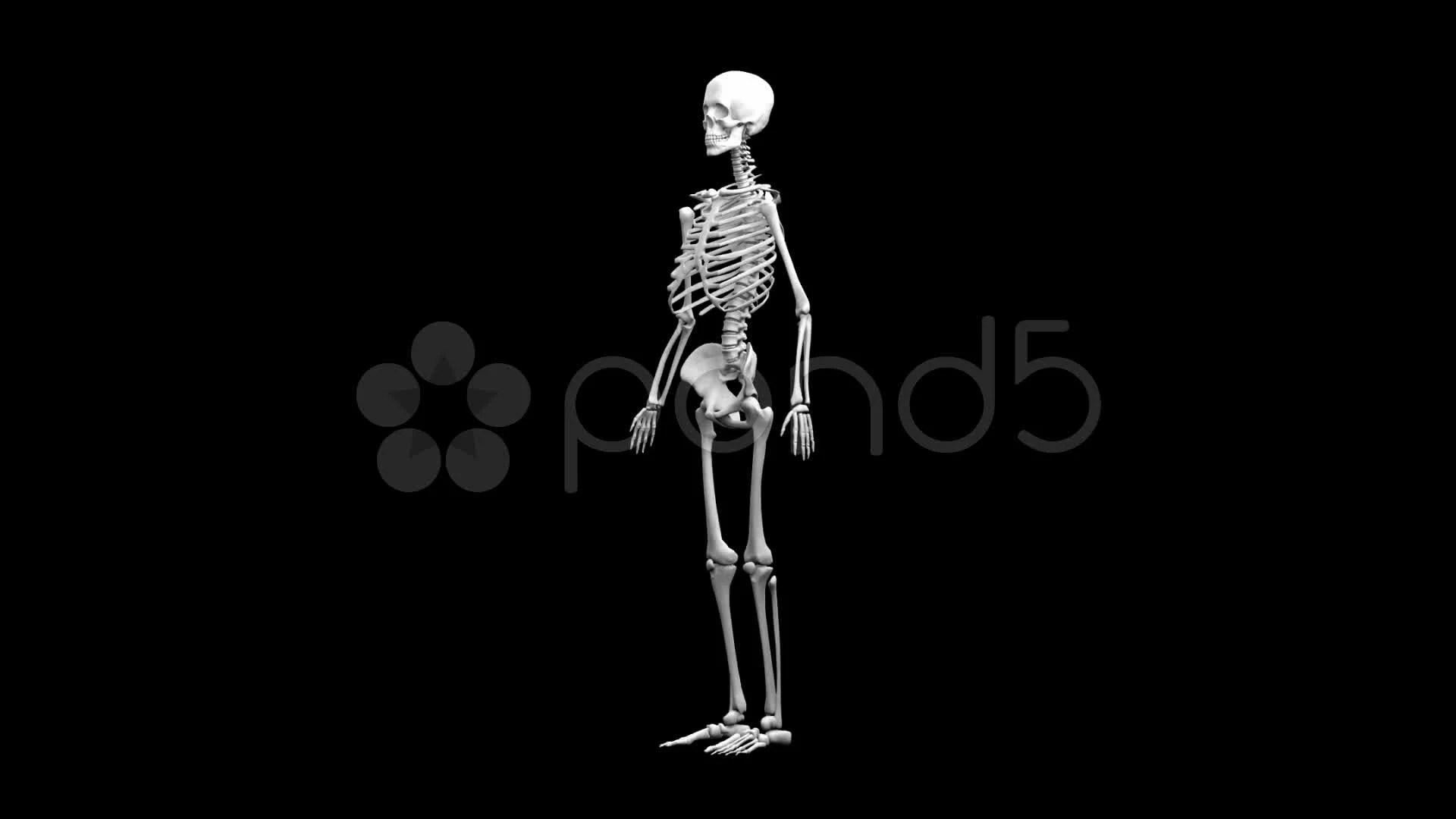 Human Skeleton Hd Images