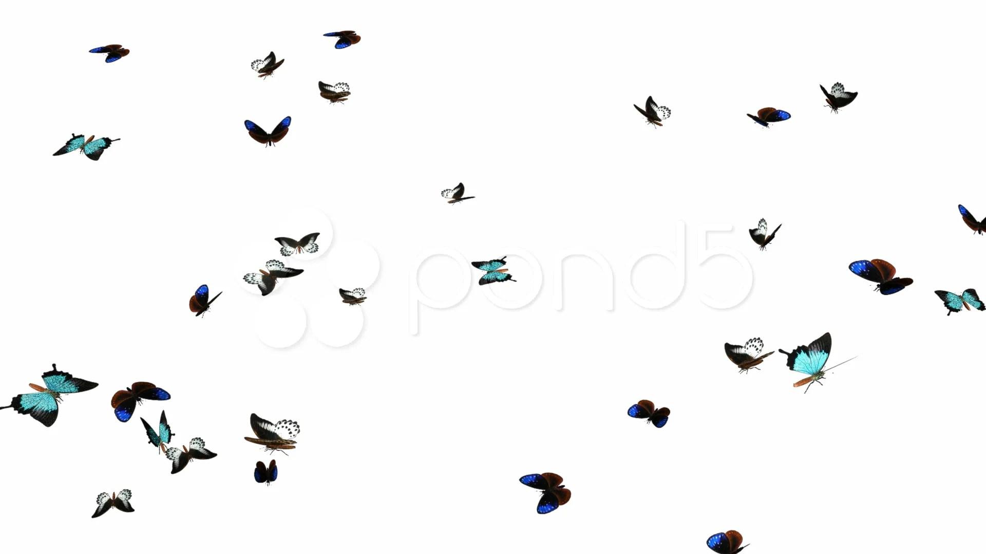 Looping Butterflies Slow Swarm Animation 2 Hi Res