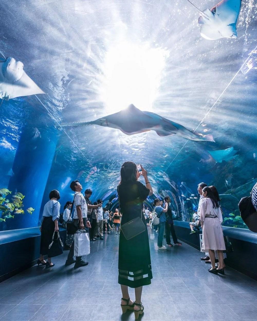 【Xpark】臺灣全新水族館門票已開放預售! | PopLady