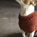 Top 5 Free Dog Sweater Knitting Patterns Lovecrafts