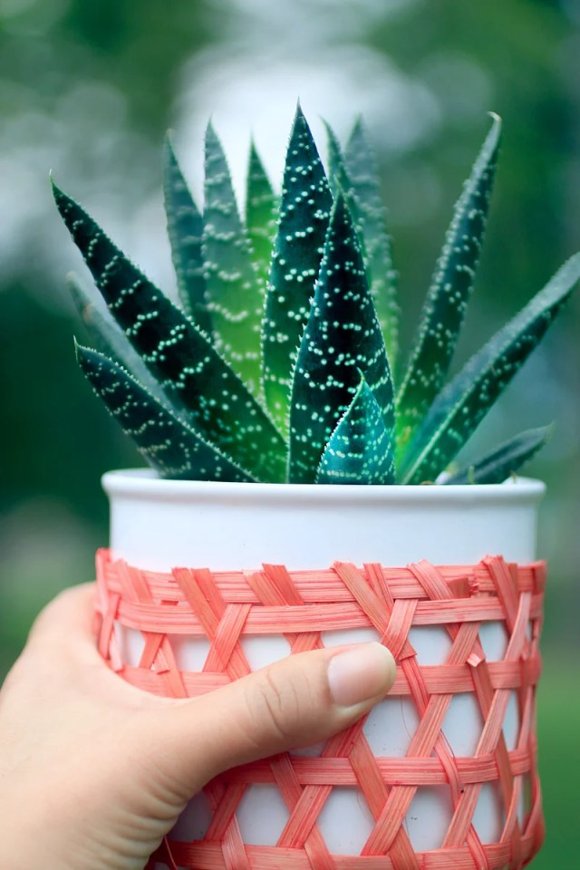 Aloe vera increases the level of oxygen in the house