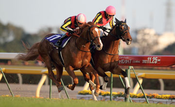 Gentildonna (far side) wins Japan Cup from Orfevre - Japan 25/11/2012