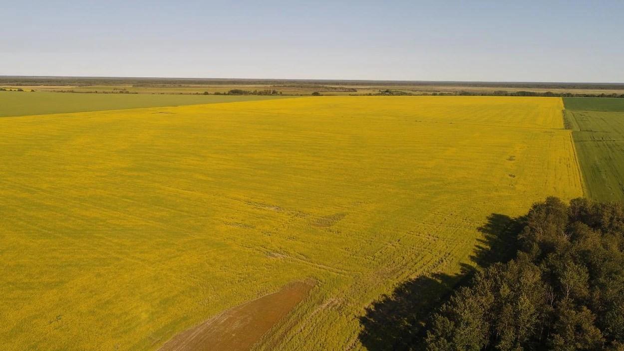 terre agricole mise en vente au canada