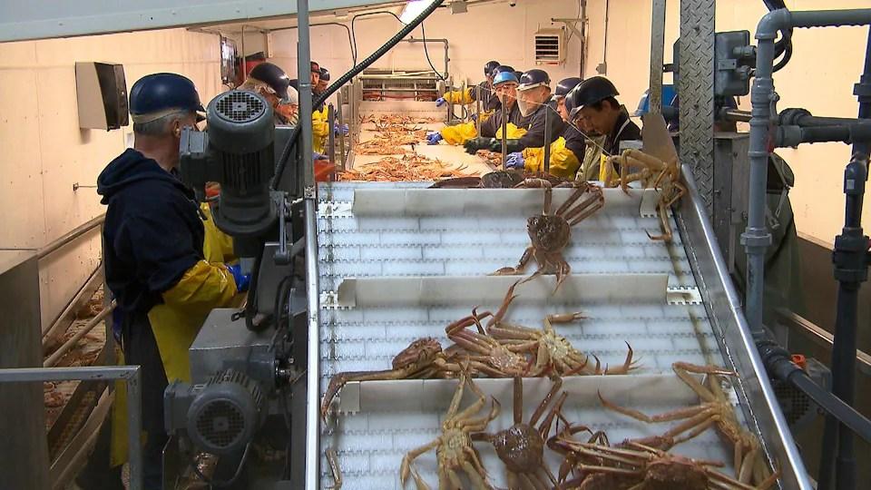 Des travailleurs de l'usine de transformation du crabe des neiges E. Gagnon et fils.