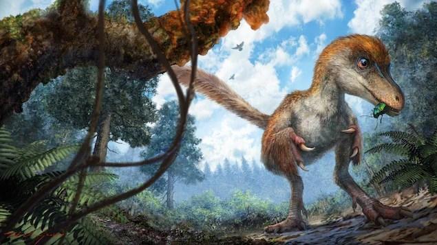 Ce dinosaure pourrait être une nouvelle espèce ou le bébé d'une espèce connue, selon des chercheurs de l'Université de l'Alberta.