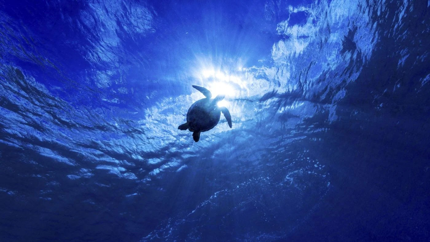 What Is The Deepest Ocean In The World