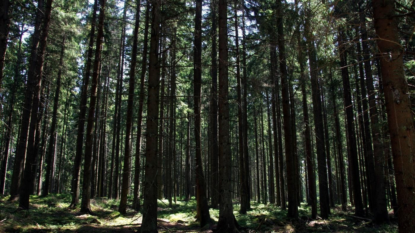 What Kinds Of Animals Live In A Forest