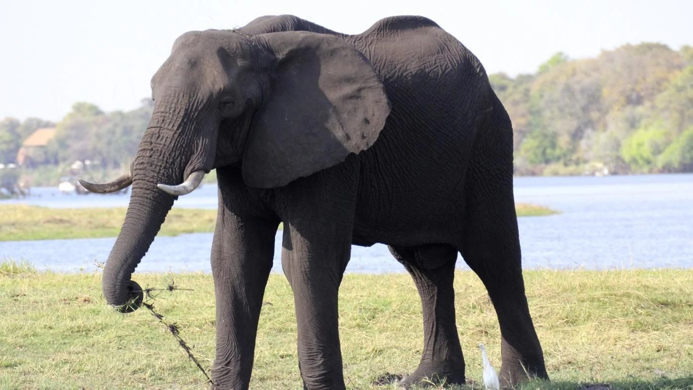 What Is The Largest Animal On Land