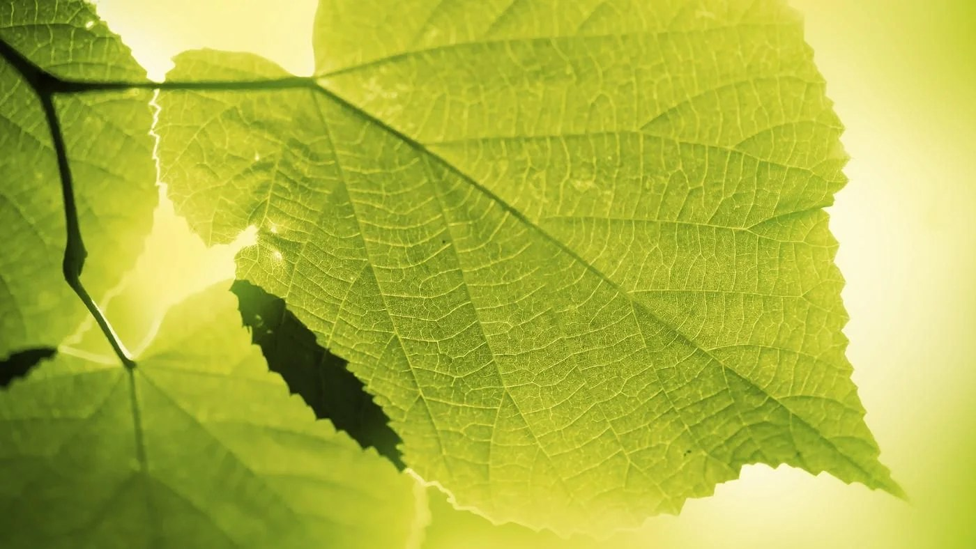How Long Does Photosynthesis Take