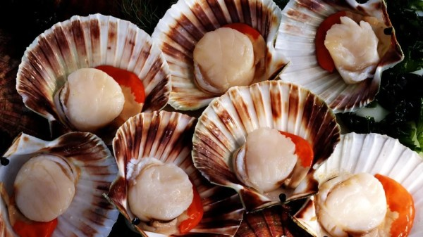 How Long Do Scallops Stay Fresh in the Refrigerator ...