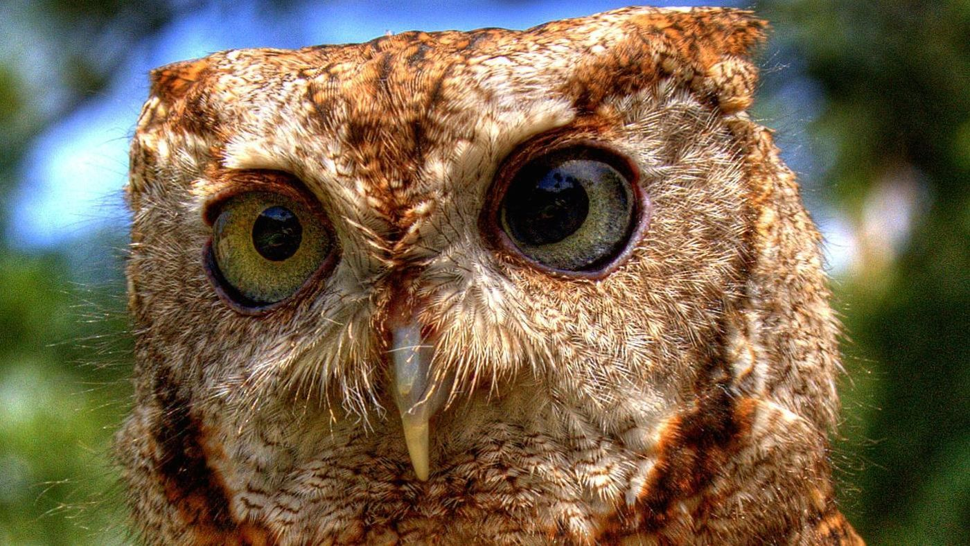Is An Owl An Omnivore An Herbivore Or A Carnivore