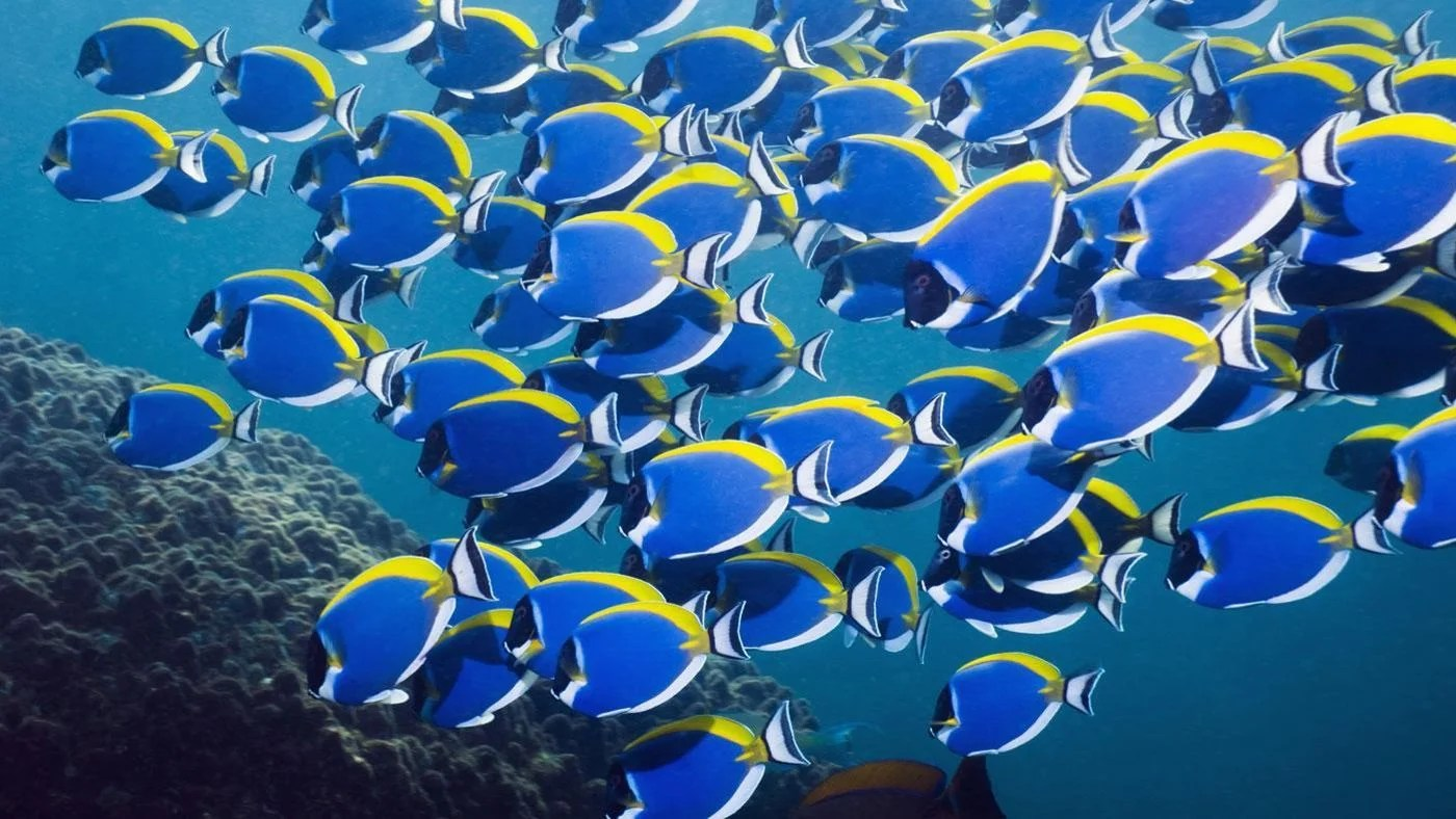 How Many Fish Are In The Sea