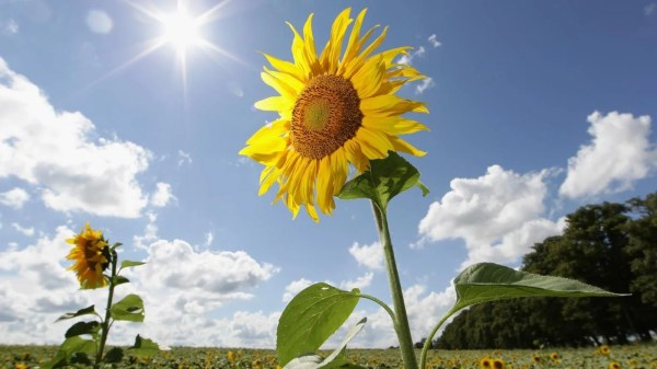 What Percent of the Sun's Energy Do Plants Use ...
