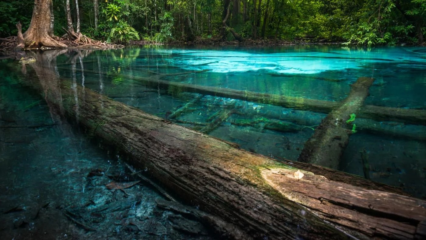 What Are The Different Types Of Ecosystems
