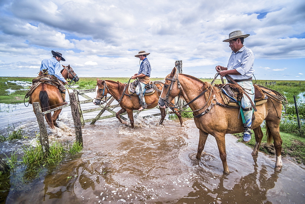 Image of cattle farmers on horses in Argentina