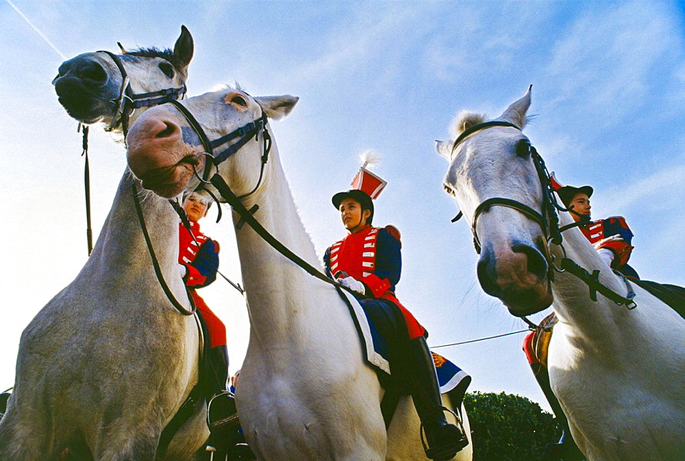 Horses at the Tamborrado festival in Spain