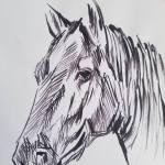 Horse Sketch Art Drawing By Bm Bundi Saatchi Art