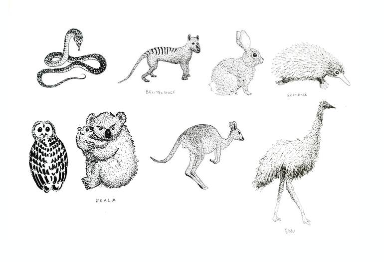 Animals Of Australia Drawing By Klemens Kuhn Saatchi Art